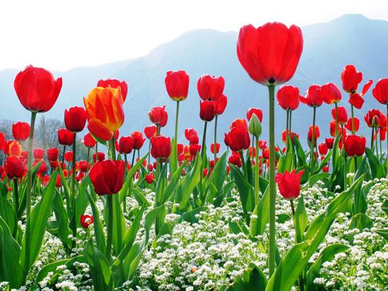 Kashmir Holidays